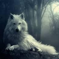 wolf lupke