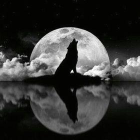 Wolfpack Kennels