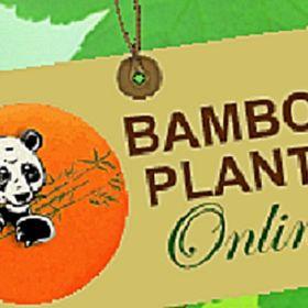 Bamboo Plants Online