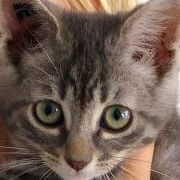 Kitty Temple