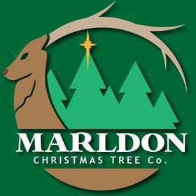 Marldon Christmas Tree Farm