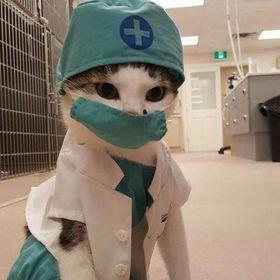 El michi Enfermero