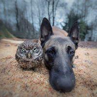 Owlan Owlan