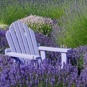 Victoria Lavender