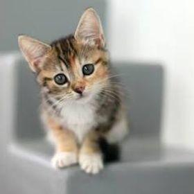 Lila & Cats