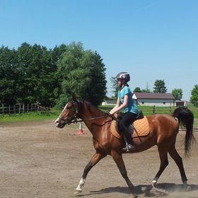 Mea Horse