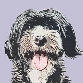 Blog mit Wuff | Hundeblog über Hundeerziehung, Beschäftigung uvm.