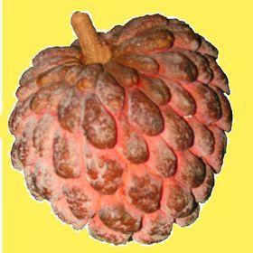 PB Rare Fruit Council