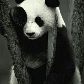 Panda 259