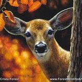 Crista Forest Wildlife Art