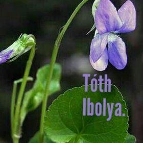 Tóth Ibolya