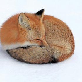 Fox Fan Forever