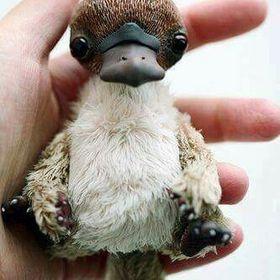 Patsy Platypus