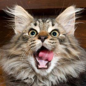 BARFmycat