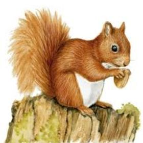 SquirrelDrawing