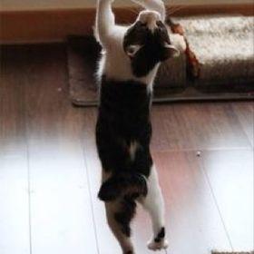 cats_hp_dance