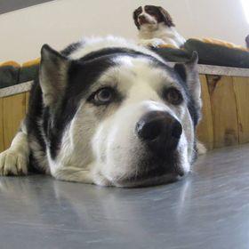 Bark City Doggy Daycare
