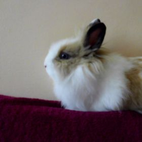 Fritzie The Bunny