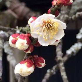 Izumi Ohno