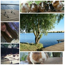 Guinea pigs, fishing, love