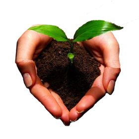 Seeds of Wellness Health Foods