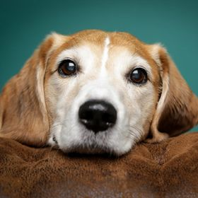 Beagle on Games