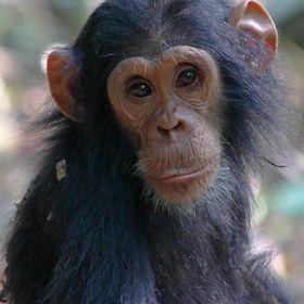 World Ape Fund