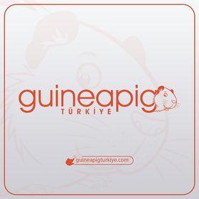 Guinea Pig Türkiye