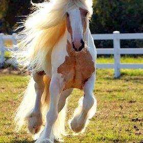 #horsesarelife