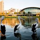 Discover Adelaide