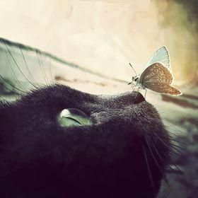 Mary Cat