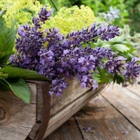 The Herbalist's Basket