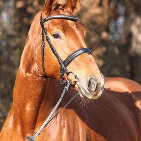 Kiparissonas Farm & Equestrian Resort