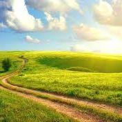 Sunny Paths