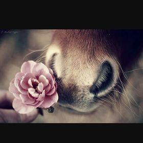 Horses_lover
