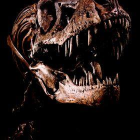 T. rex Sonderausstellung Salzburg