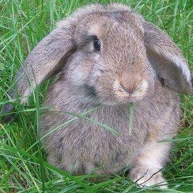 Malgosia's Rabbit Shelter