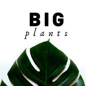 BIG plants