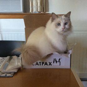 Catpax
