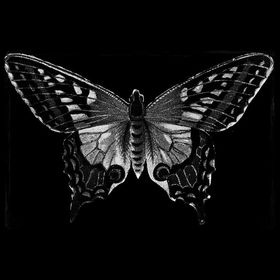 Gothicbutterfly mdh