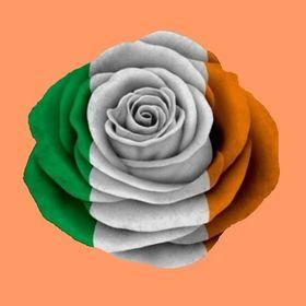 Rose 🌹 Keltisch ☘️ 🌹 🍀