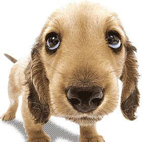 We Love Dogs ♥ Guide Dogs Worldwide ♥