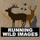 Running Wild Images