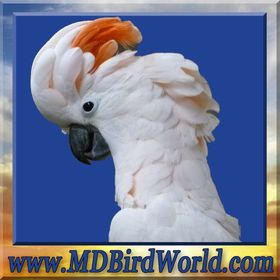 MandD BirdWorld