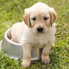 Dog or Dog | Potty Training | Dog Diapers | Dog Accessories | Handicapped Dog | Pet Insurance