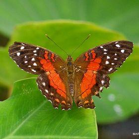 Mariposa Mariposa