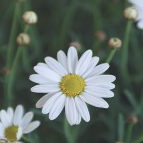 Daisy Hill Flowers