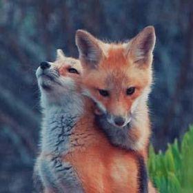 Izi Fox