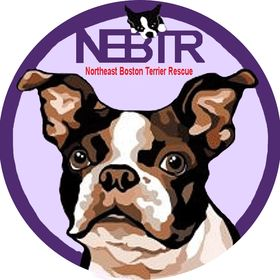 Northeast Boston Terrier Rescue Group (NEBTR)