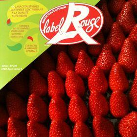 Envies de fraises Label Rouge